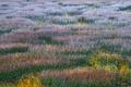Autumn reflections on the Tarn
