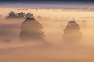 Valley fog at first light.