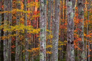 Woodlands Kaleidoscope