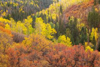 Oak and Aspen Colors