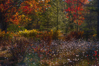 Octobers Blooms
