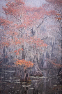 autumn, caddo lake, cypress, swamp, texas