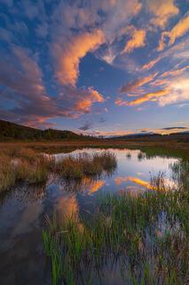 Wetlands Mirror