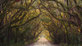 Live Oak Country Lane