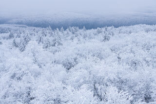 Winters Grip #1