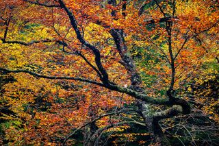 art, beautiful, colorful, design, fine art, for sale, forest, limited edition, photo, prints, wall art