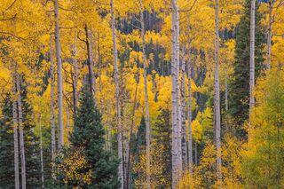 Autumn Riot of Color