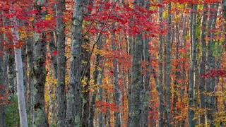 Sier De Mont Autumn Forest