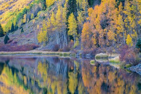 Autumn Aspen Reflections