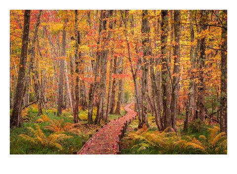 Autumn Walker