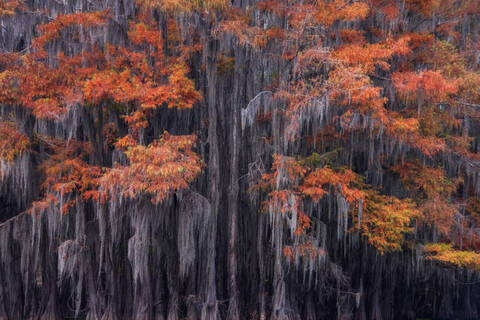 Caddo Lake Autumn Cypress Swamp Photo Workshop - November 12 - 16, 2021 - Sold Out