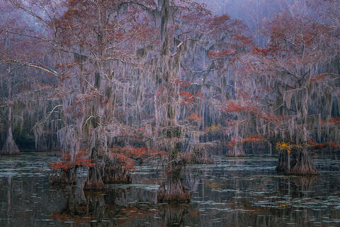 Autumn in the Cypress Swamps Photo Workshop - November 4-8, 2022 - 4 Spaces Open