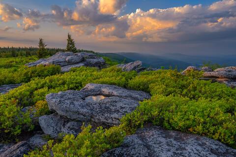 Bear Rocks Spring Vista