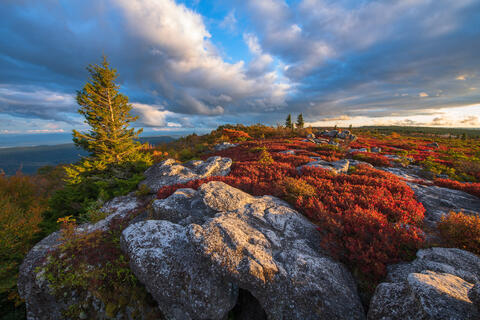 Dolly Sods Afternoon Delight