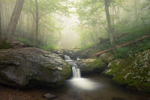 Spring in Shenandoah Photography Workshop - June 11 - 13, 2021 - 2 Spots Open