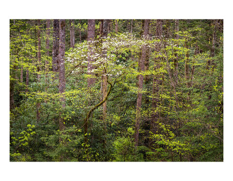 New Release Gallery: Great Smoky Mountains National Park