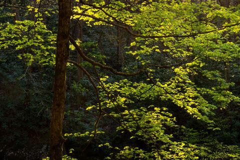 Landscape, appalachian, april, art, beautiful, color, colorful, design, dramatic, fine art, for sale, forest, great smoky mountains...