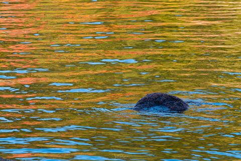 Jordan Pond Autumn Reflections