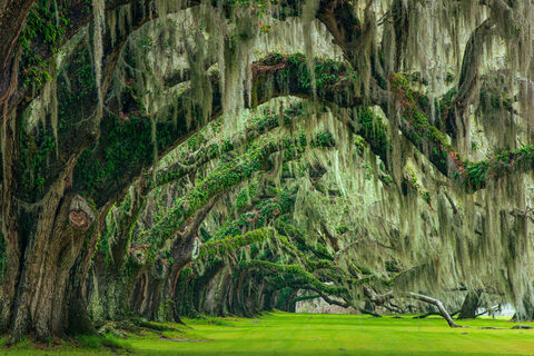 Charleston Landscape Photography Collection