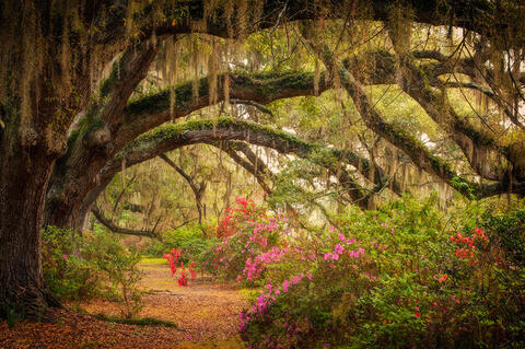 Charleston South Carolina Photography Workshop -  March 19-23, 2021 - Sold Out