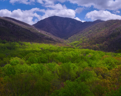 Mighty Mount LeConte