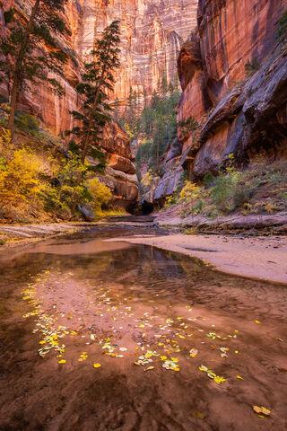 A Canyon Autumn