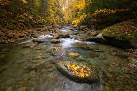 White River Autumn