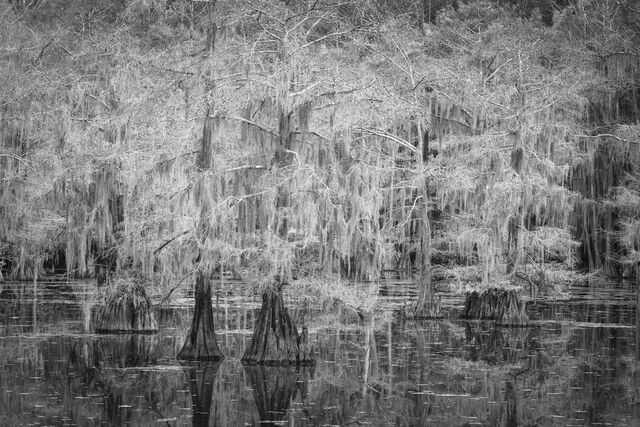 Cypress Haunt
