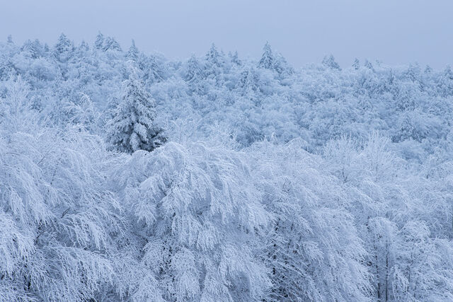 Winters Grip #2