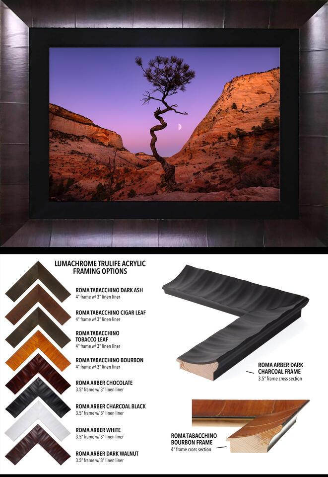 Roma Museum Framed TRULIFE® Lumachrome Acrylic Prints