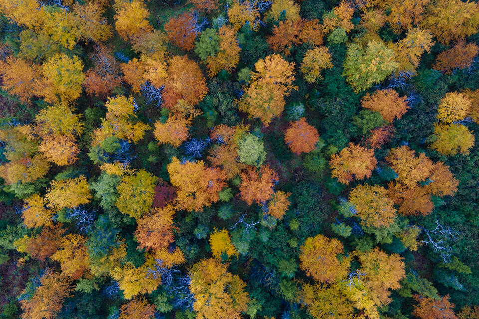 West Virginia Autumn Ariel Landscape Photo.