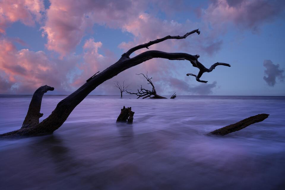 Bulls Island Boneyard