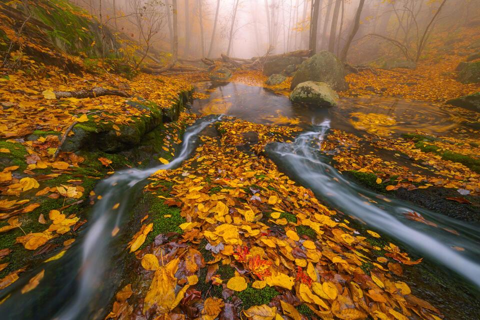 Fallen Autumn Splendor