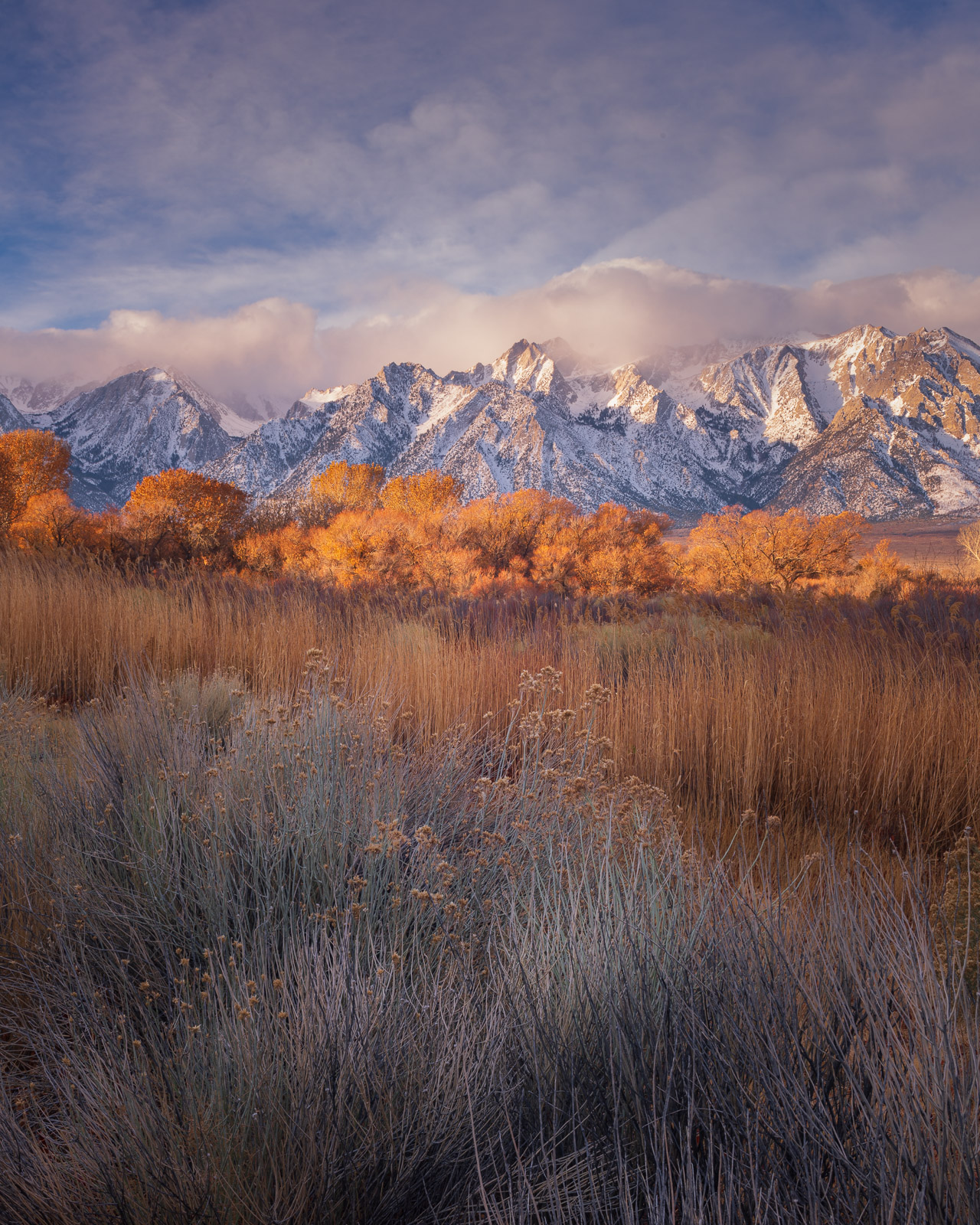 The Eastern Sierra rise above sage and cottonwoods in the Owens Valley.