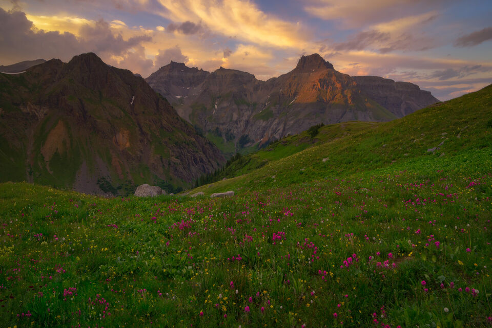 Indian Paintbrush and the peaks of the San Juan Mountains at sunset from Governors Basin, a high altitude basin in the Rocky...