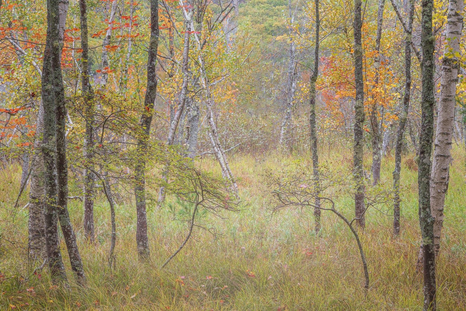 Autumn scene along the Jessup Path, Acadia National Park.