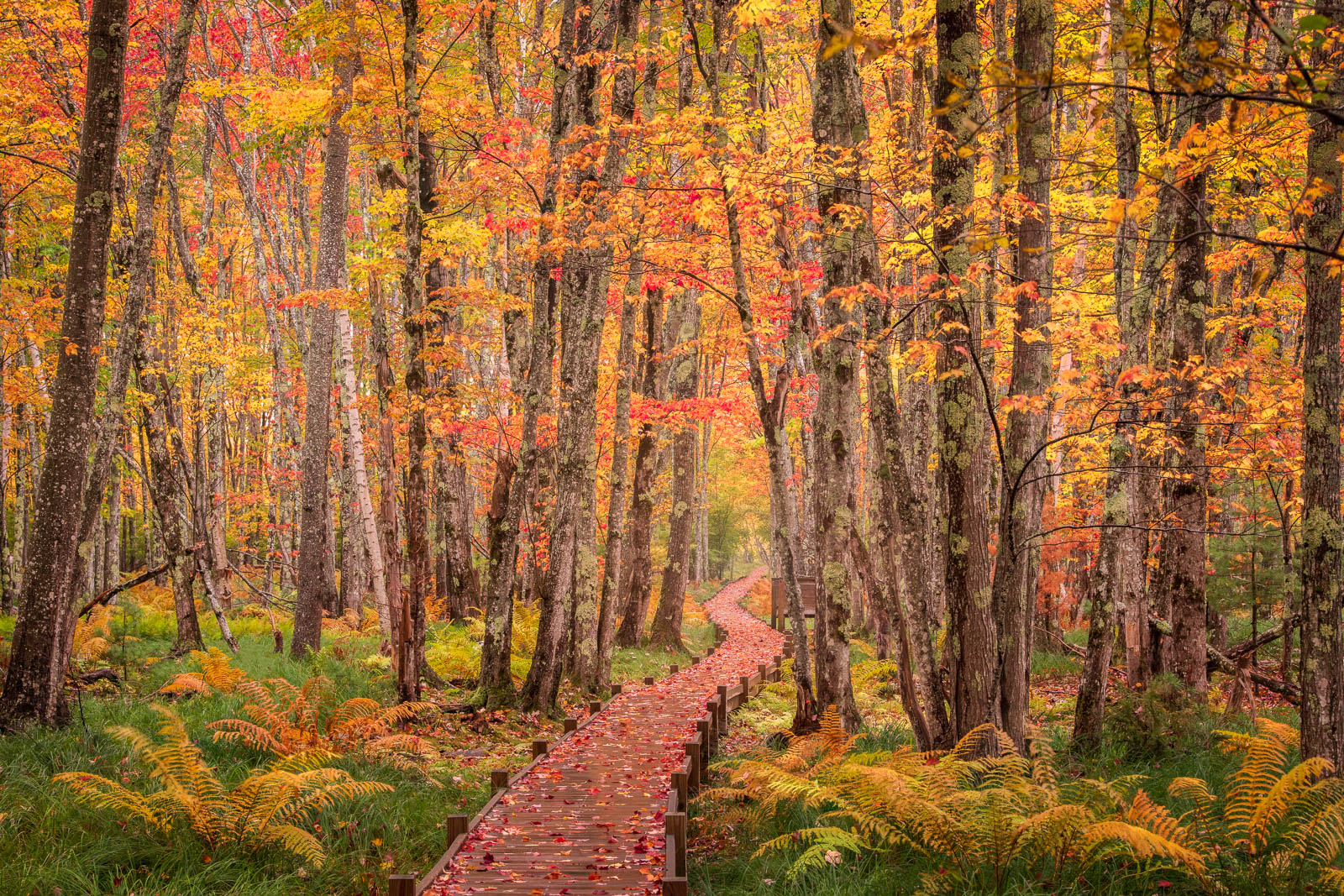 Fall along the Jessiup Path in Acadia National Park, Maine.