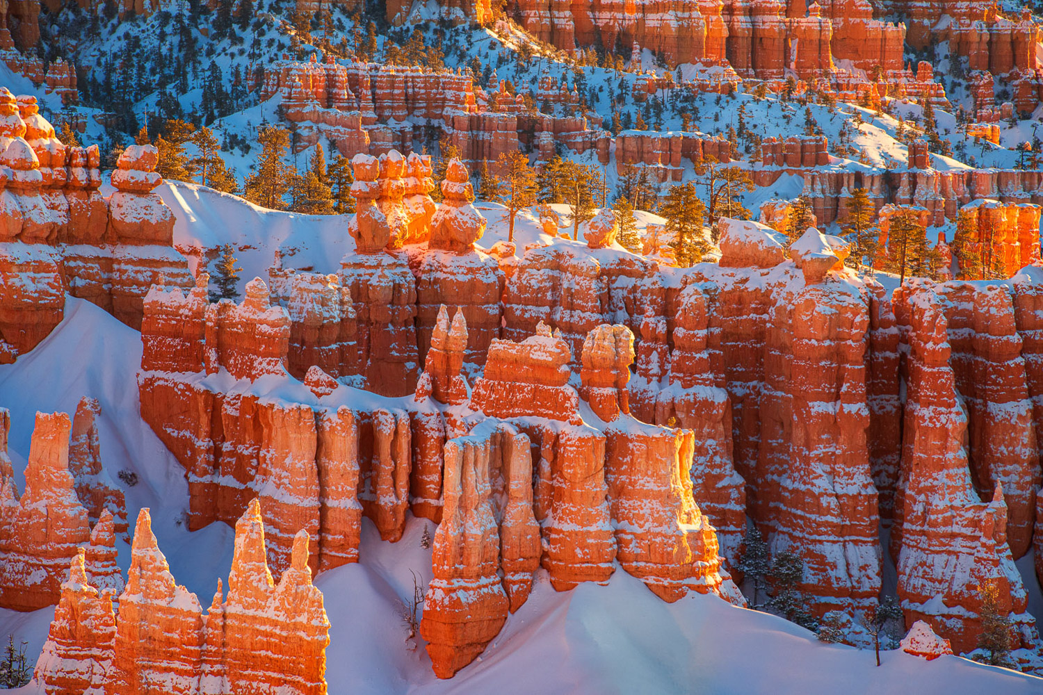 The hoodoos of Bryce Canyon glowing in sunrise light after a winter snowstorm the night before.