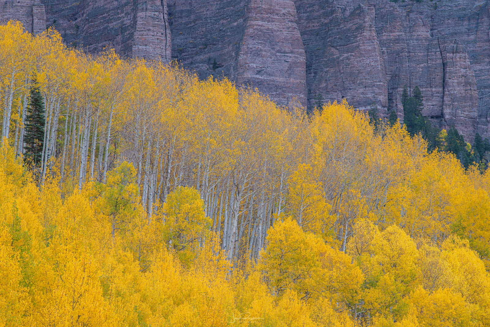 Aspens below Turret Ridge from Silver Jack Reservoir.