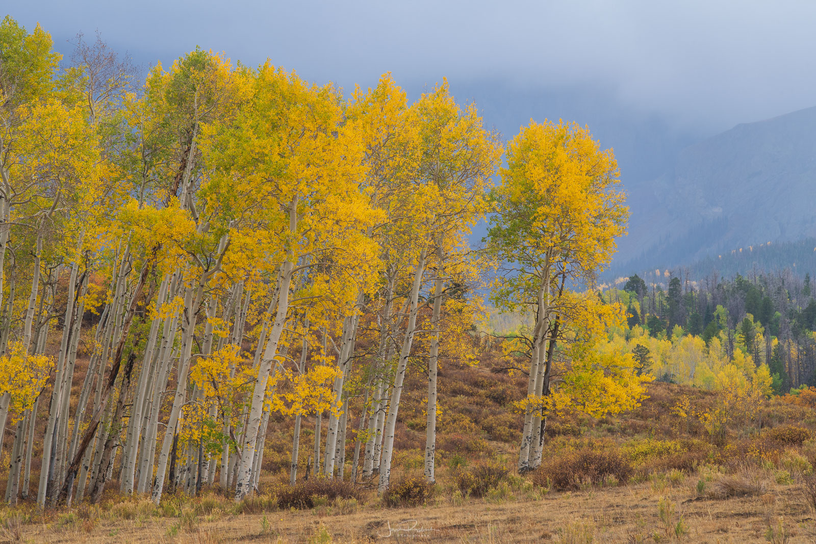 Autumn aspens and stormy weather near Ouray.
