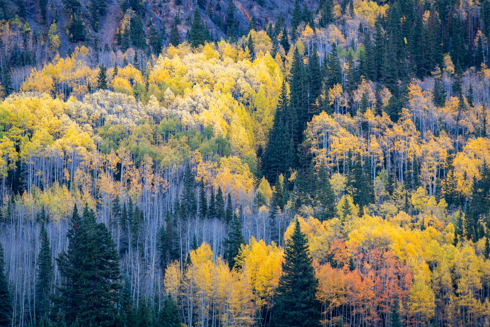 Autumn colors from the Million Dollar Highway.