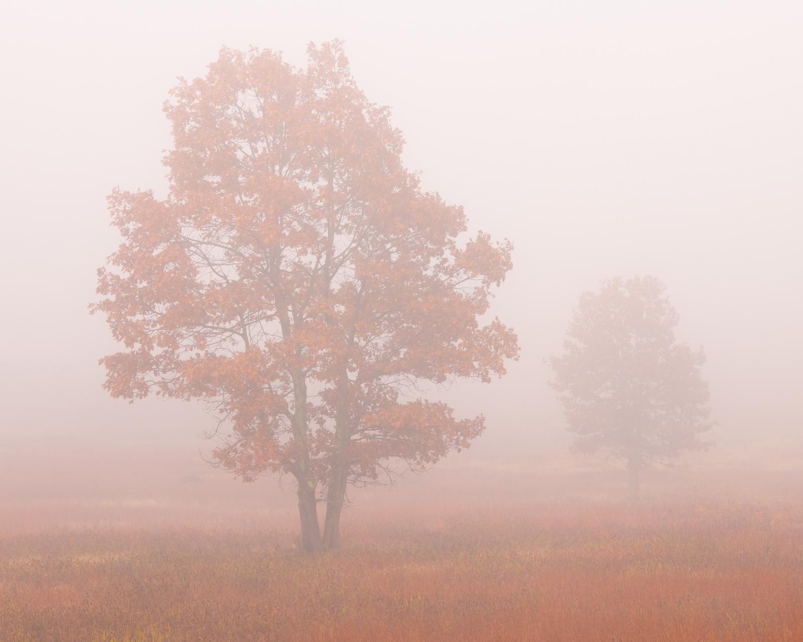 Thick fog blankets Big Meadows in Shenadoah National Park.