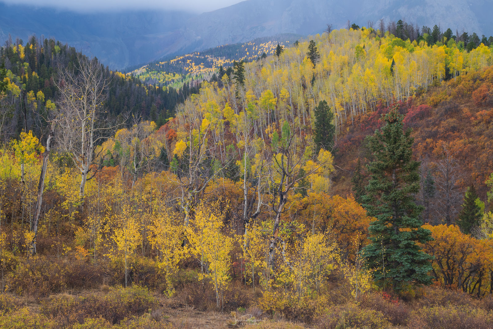 Autumn color from Last Dollar Road outside of Ouray.