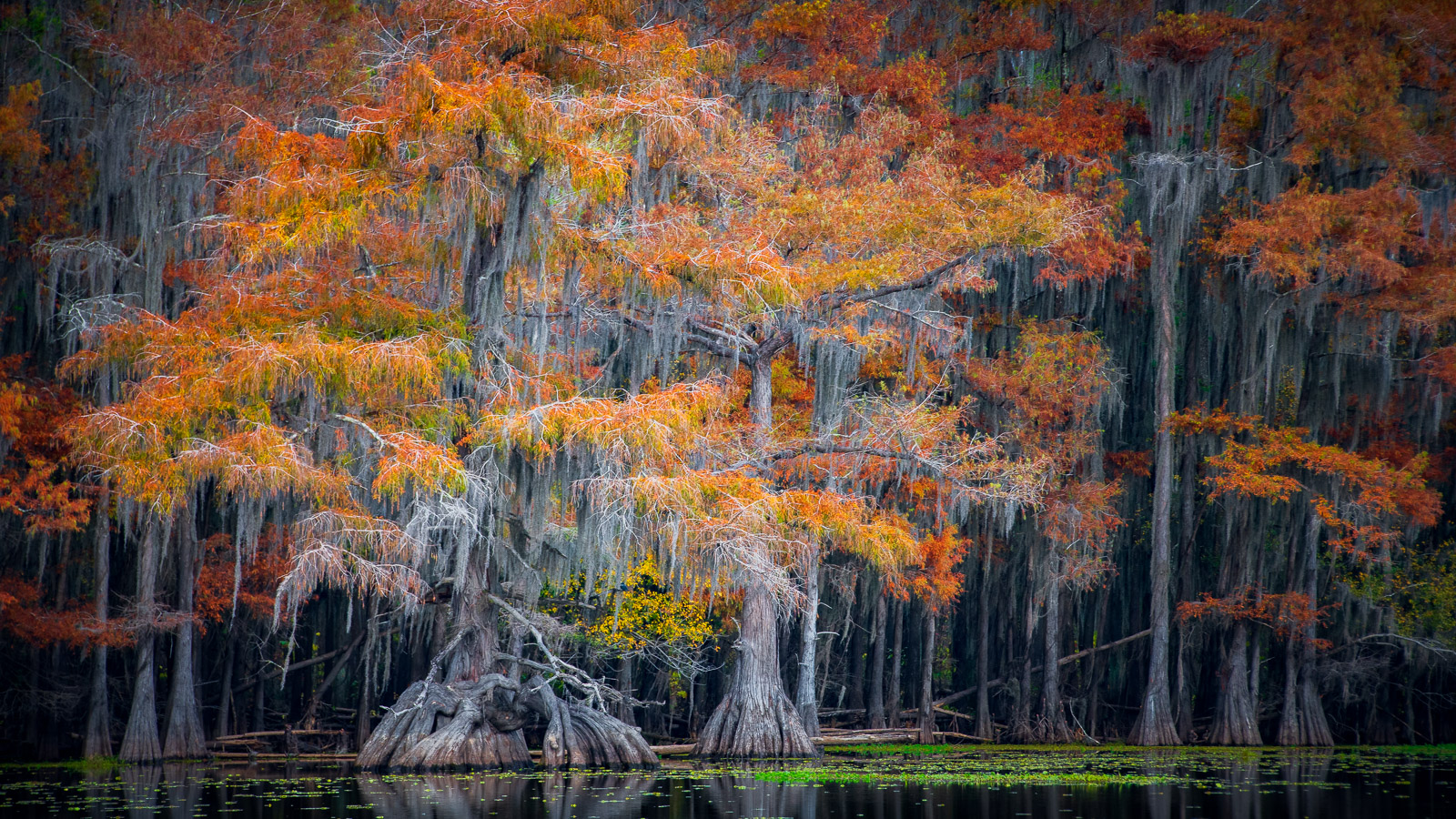 Autumn Cypress on Caddo Lake, Texas.