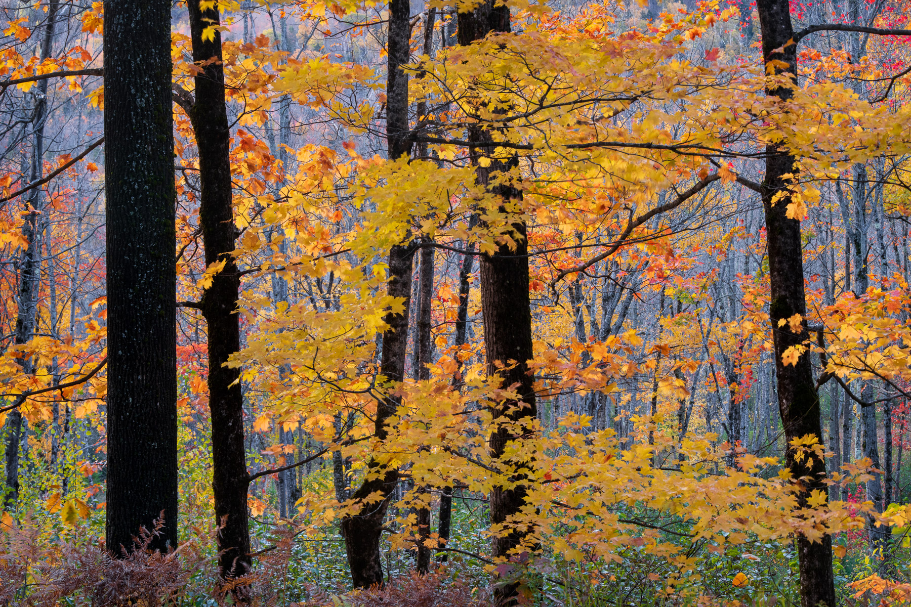Autumn color captured in Central Maine's Lake Region.