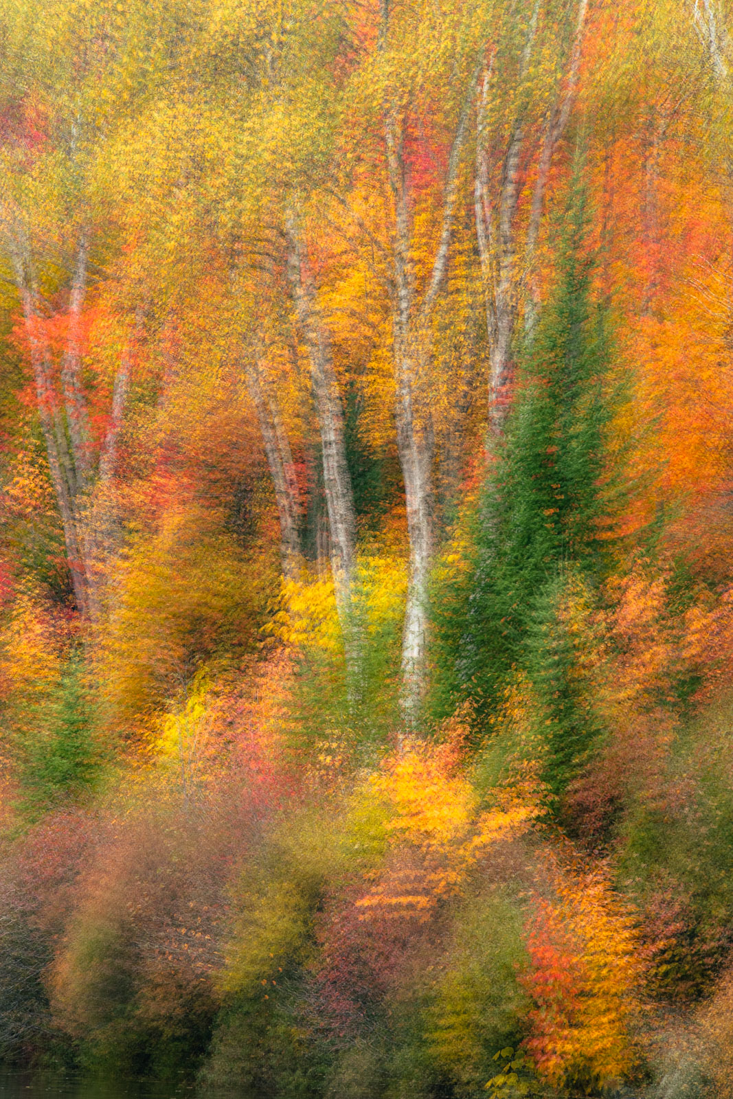 Abstract ICM (intentional camera movemnet) of autumn woodlands in Vermont's Northeast Kingdom.