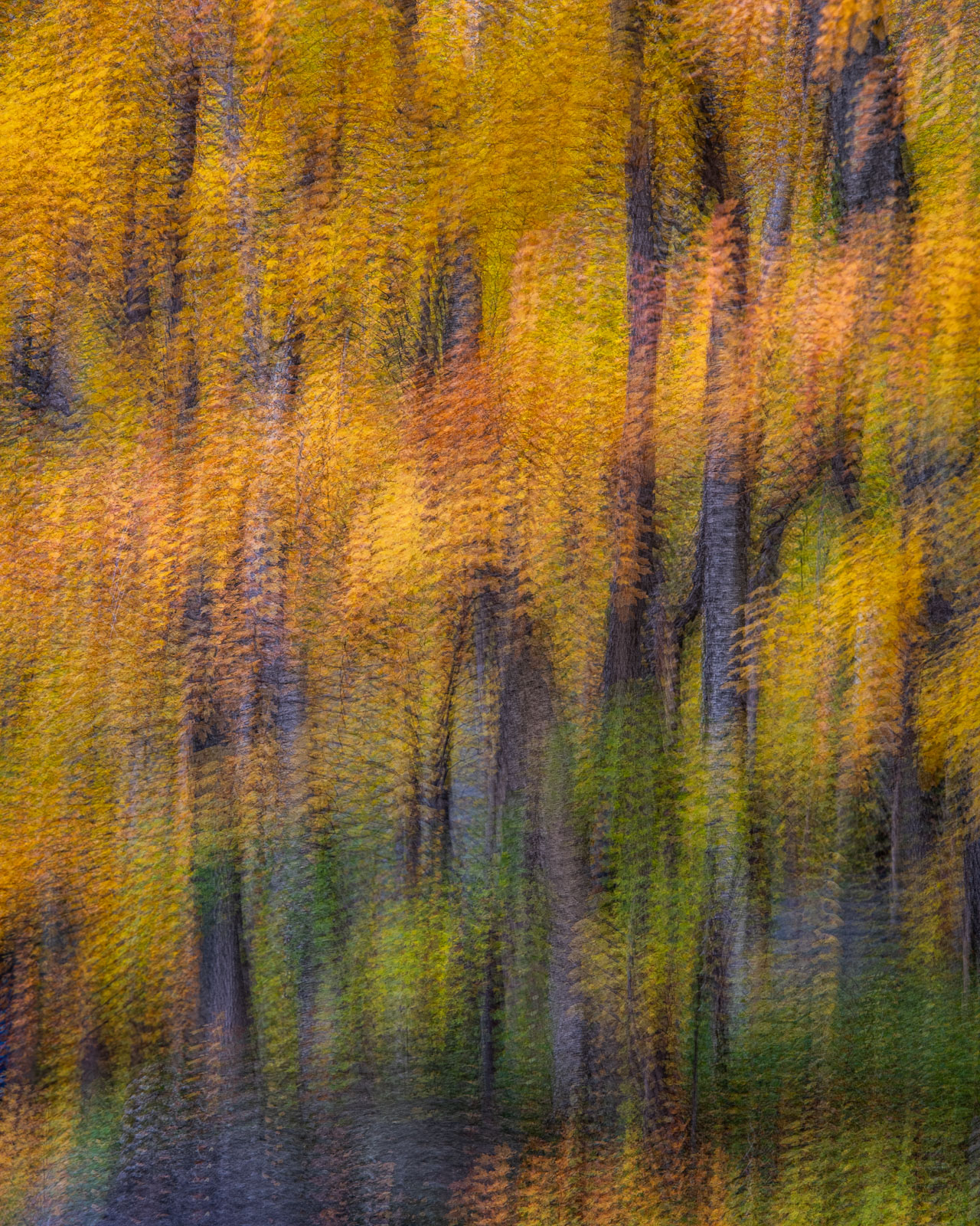Abstraction of autumn woodslands in Vermont's famous Smugglers Notch.