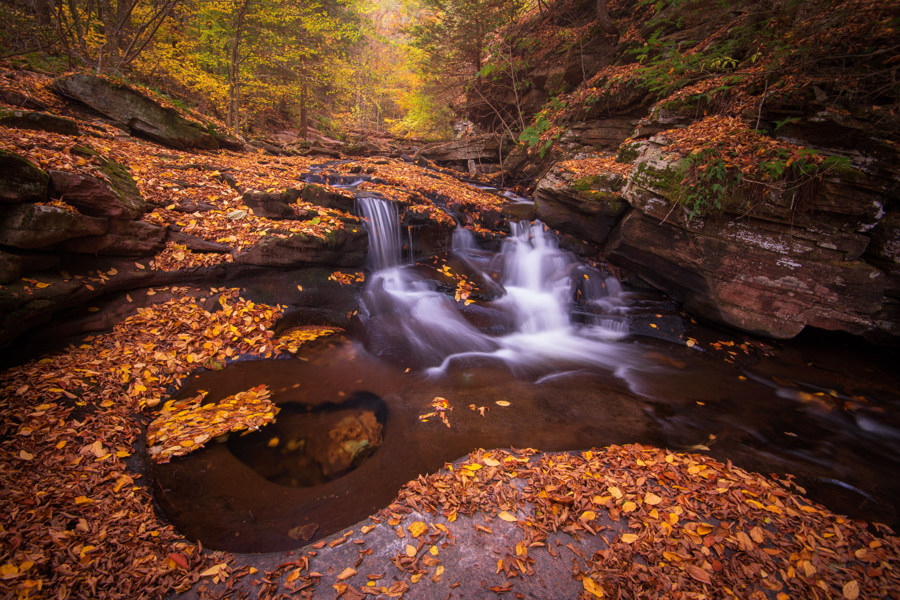 A small waterfall in Glen Leigh captured with peak autumn color, Ricketts Glen State Park, Pennsylvania.
