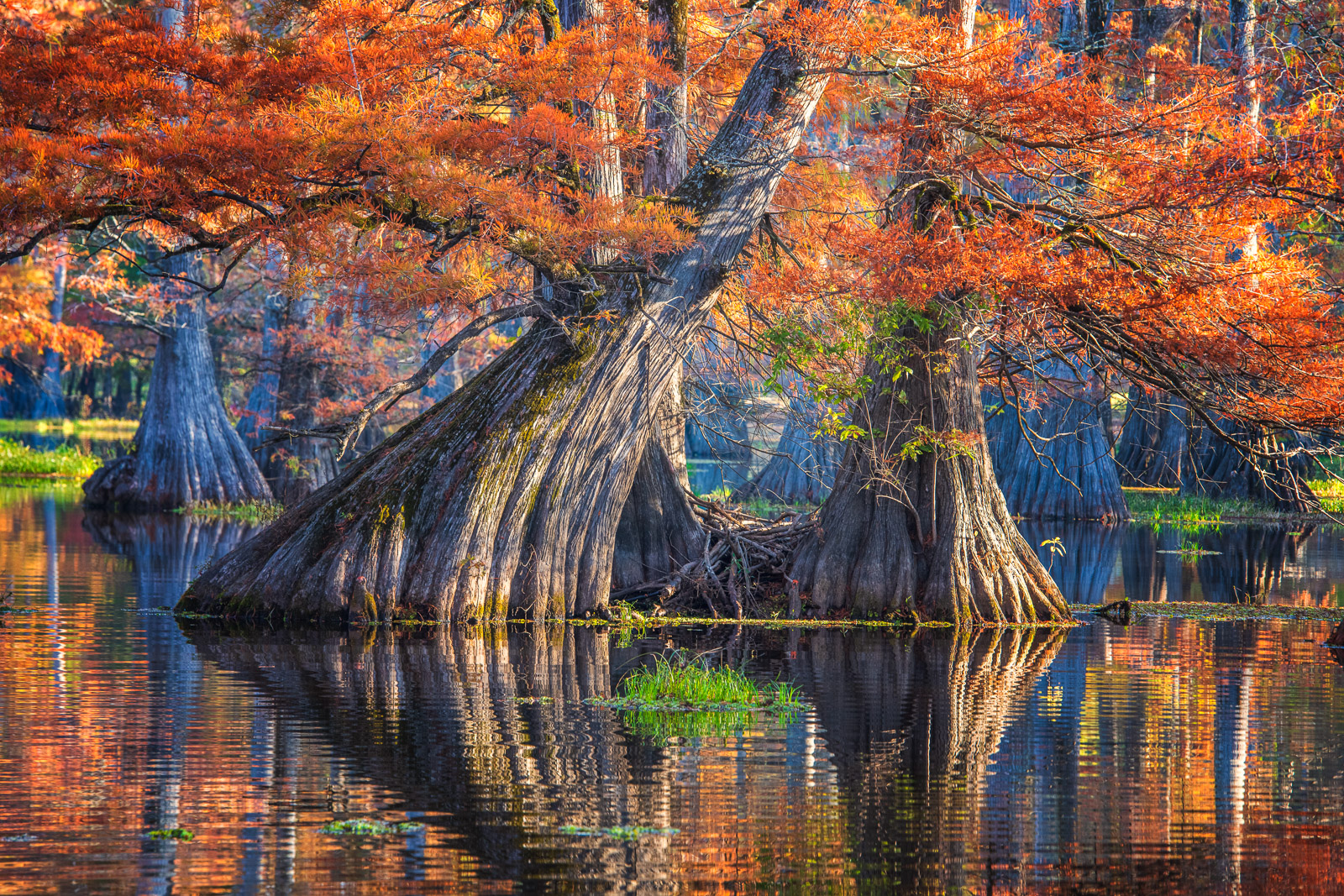 Caddo Lake is flood plain that has swamped one the of the Southeast's largest Bald Cypress environments. It is one of the most...