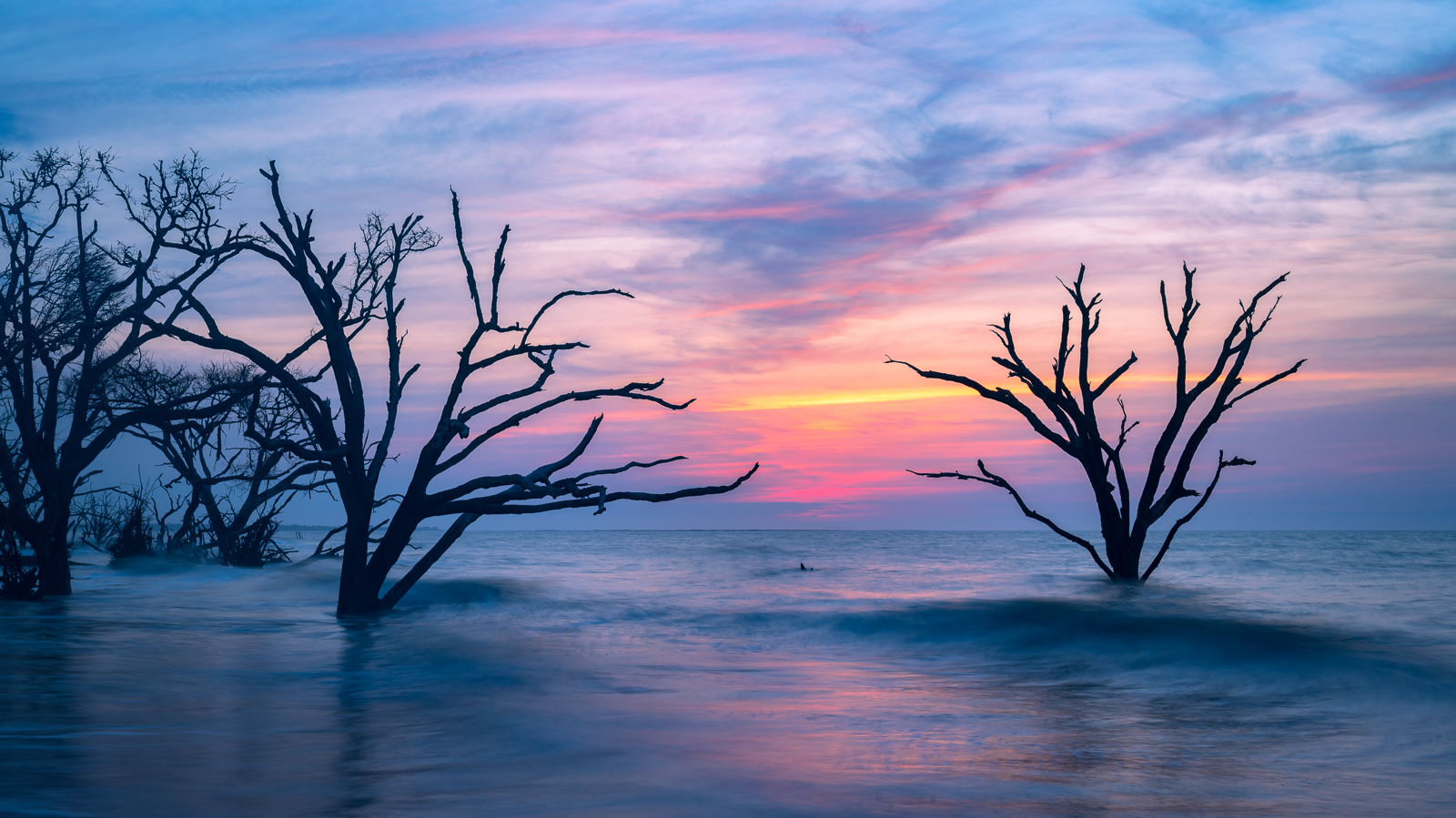 Live Oaks submerged at high tide along Botany Bay's Boneyard Beach south of Charleston.